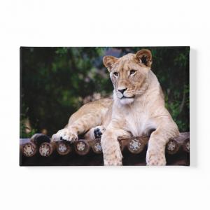 Canvas art lioness