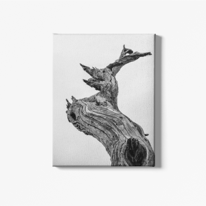 Daz Prints wall canvas ancient tree