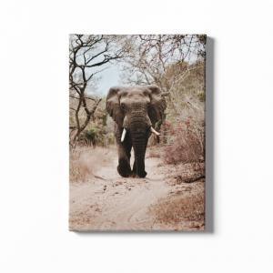 Daz Prints wall canvas African Elephant